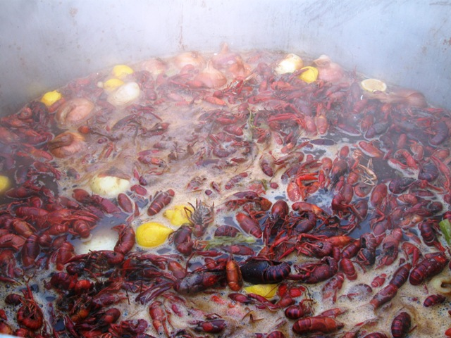 Boiled South Louisiana Crawfish